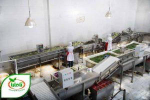 صنایع غذایی تامارا